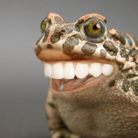 toothy frog